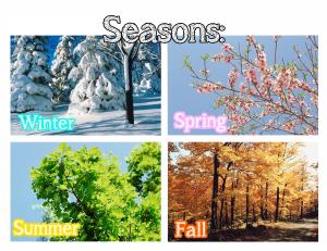 Season Chart
